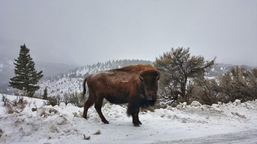 North Yellowstone, Montana, Wyoming, Yellowstone National Park