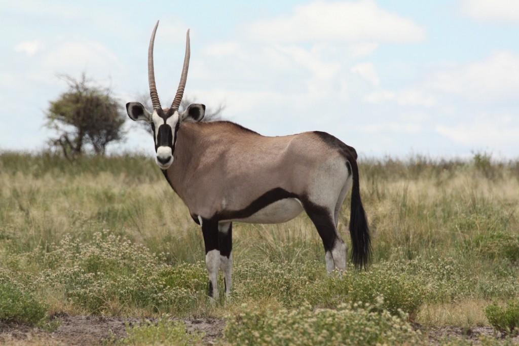 Etosha National Park on a Budget, Etosha, Namibia