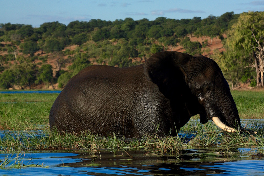 Chobe National Park, Chobe River, Game Drive, River Cruise, Botswana,