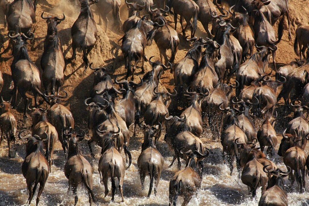 Best Safaris in Africa 2016, Masai Mara, Kenya, Safari, Africa, Lion, Cheetah, Great Migration, Leopard