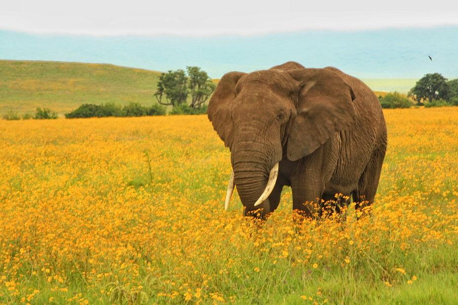 Ngorongoro Crater, Masai Mara, Kenya, Safari, Africa, Lion, Cheetah, Great Migration, Leopard