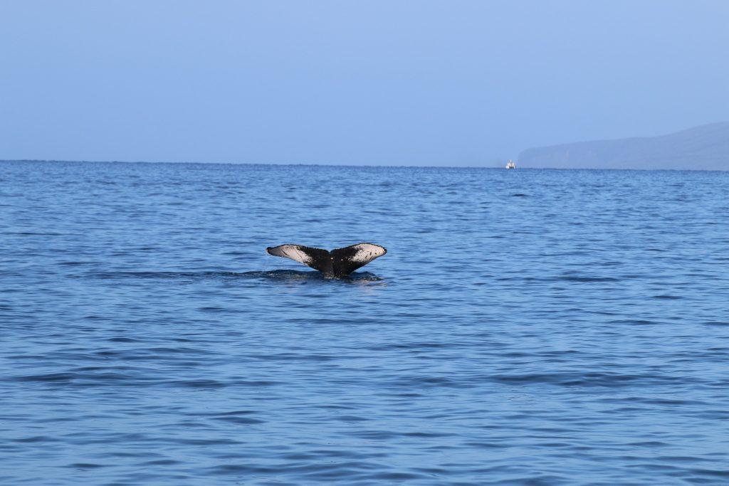 Kayaking Maui - Maui Ocean Sports. See more at www.beardandcurly.com