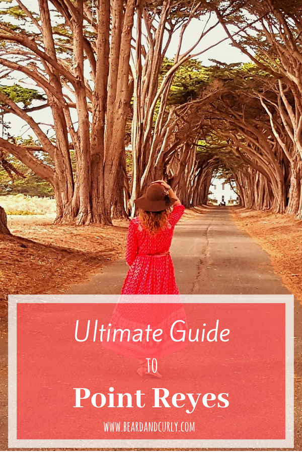 Ultimate Guide to Point Reyes, Top Things to do in Point Reyes, San Francisco, Northern California, Cali, Hiking, Coastline, Photography #pointreyes #sanfrancisco #california #hiking www.beardandcurly.com