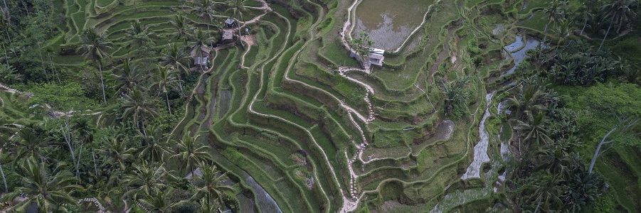 Bali, Indonesia, Ubud, Rice Fields, Terraces, Tegalallang, beardandcurly.com