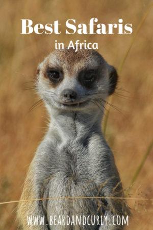 Best Safaris in Africa, How to Safari on a budget, Botswana, Kenya, Tanzania, Uganda, South Africa, Namibia, Etosha, Masai mara, Murchison, Chobe, Moremi, Gorilla Trekking, Serengeti